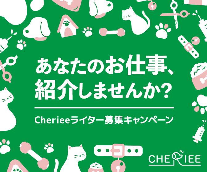 Cheireeライター募集キャンペーン!
