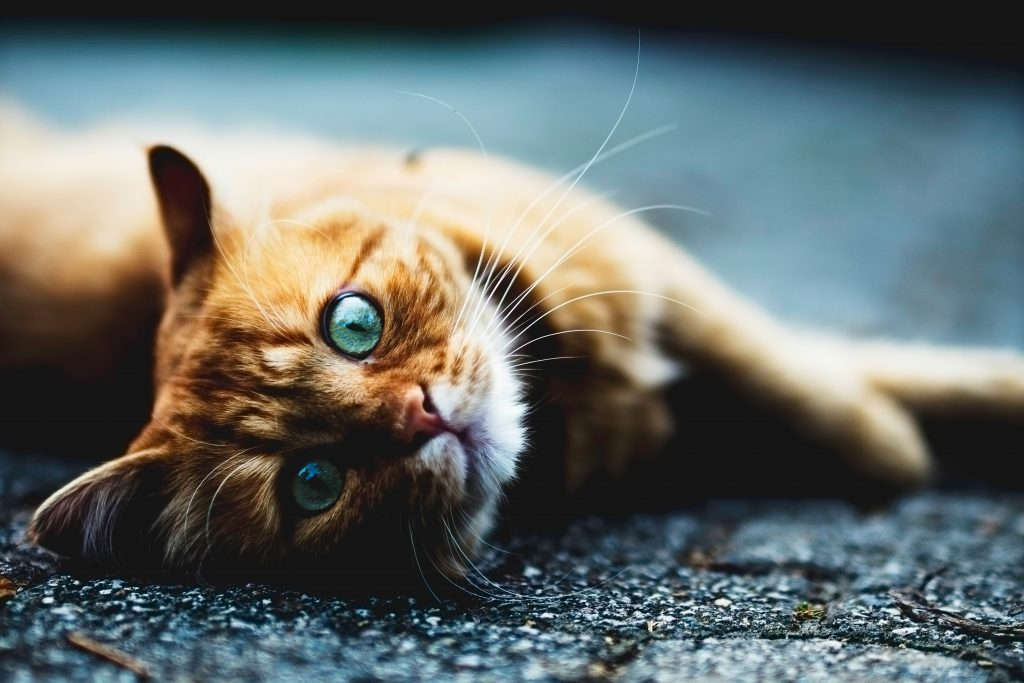 猫の年齢、早見表。長生きな猫の種類は? | Cheriee